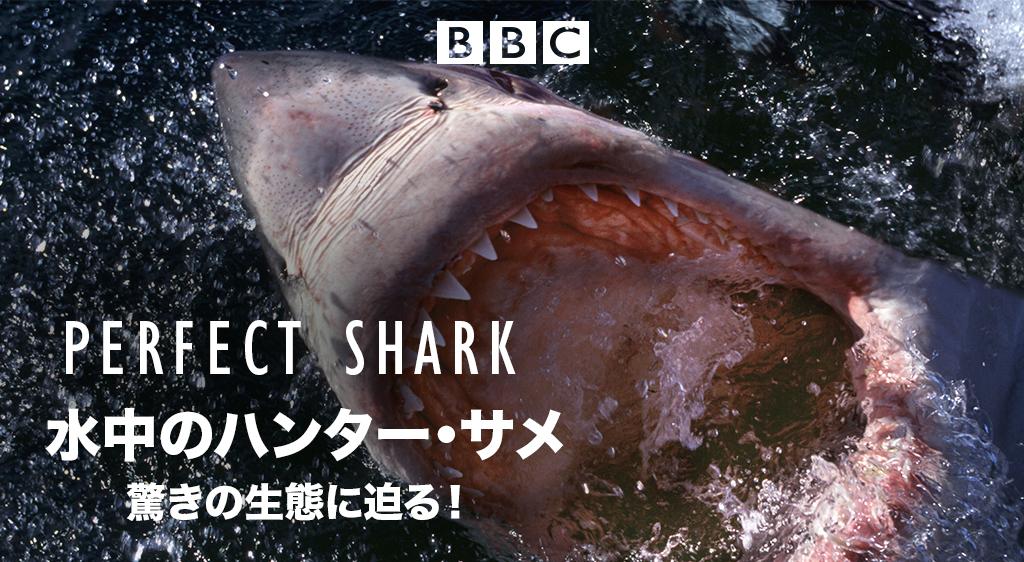 水中のハンター・サメ 驚きの生態に迫る!(ナチュラル・ワールド)