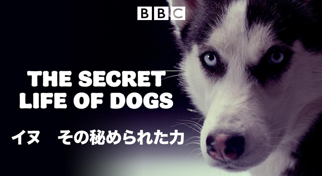 イヌ その秘められた力