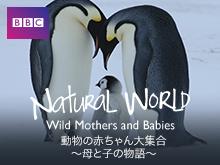 動物の赤ちゃん大集合~母と子の物語~