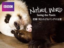密着!知られざるパンダの生態