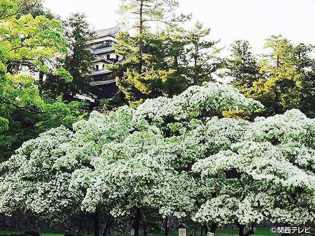 #15 2016/7/17放送 にっぽん城紀行 松江城・3