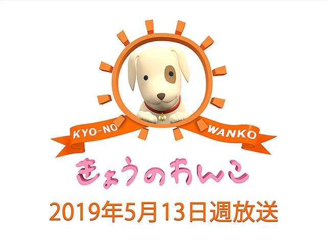 【無料】2019/5/13週放送 きょうのわんこ