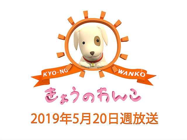 【無料】2019/5/20週放送 きょうのわんこ