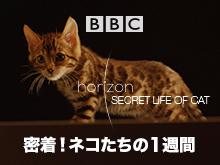 (日本語吹替版)密着!ネコたちの1週間