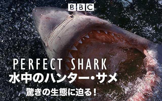 (日本語吹替版)水中のハンター・サメ 驚きの生態に…