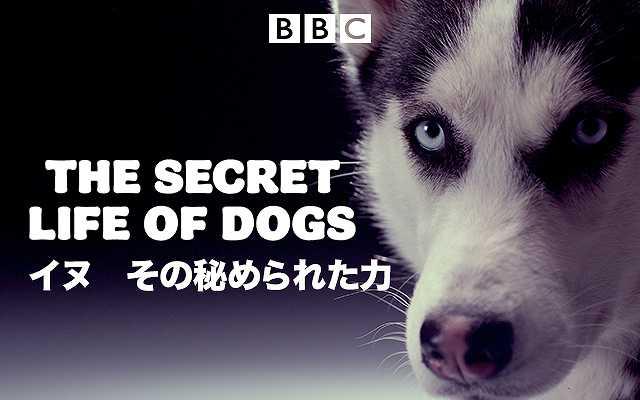 (日本語吹替版)イヌ その秘められた力