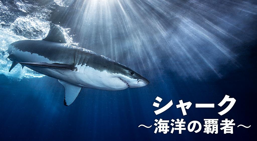 シャーク~海洋の覇者~