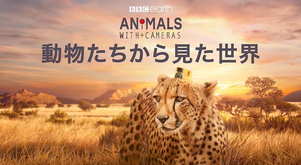 動物たちから見た世界
