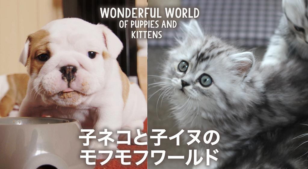 子ネコと子イヌのモフモフワールド