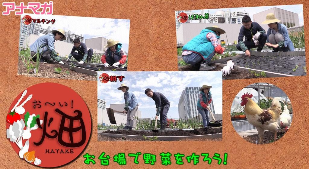 アナマガ「お~い!畑」(2015‐2016)