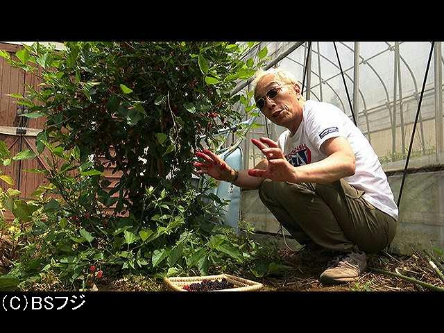2019/8/17放送 桑の実サマー