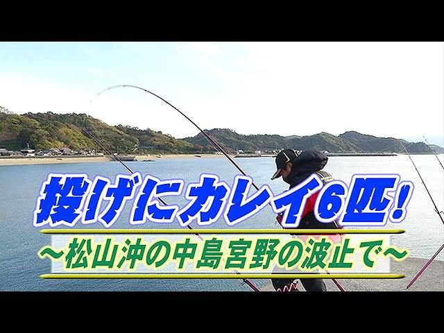 投げにカレイ6匹!松山沖の中島宮野の波止