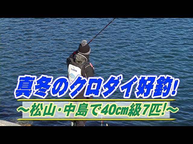 真冬クロダイ好釣!松山中島40cm級7匹