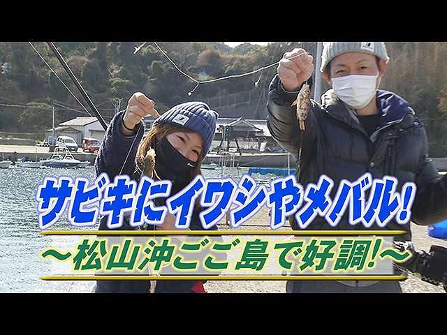サビキにイワシやメバル!松山ごご島で好調