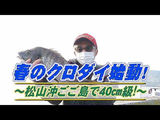 春のクロダイ!松山沖ごご島で40cm級!