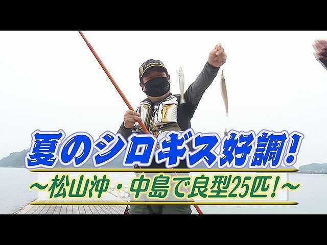 夏シロギス好調!松山沖・中島で良型25匹!