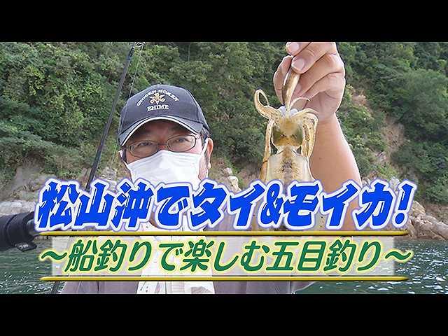 松山沖タイ&モイカ!船釣り楽しむ五目釣り