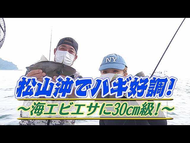 松山沖でハギ好調!海エビエサに30cm級!