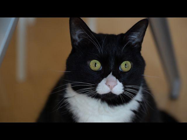 第3回 猫の手かしてあげよかニャ