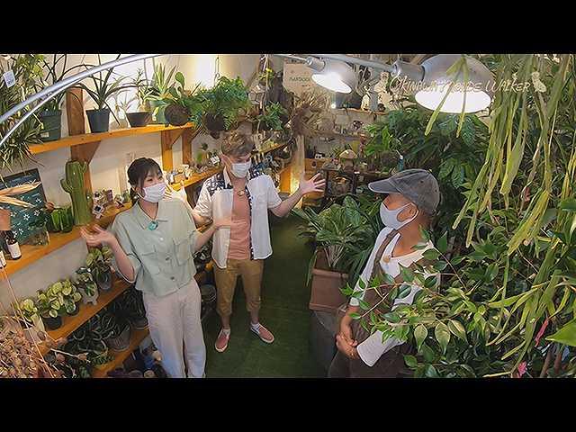 部屋を彩る観葉植物と老舗写真館で撮影♪