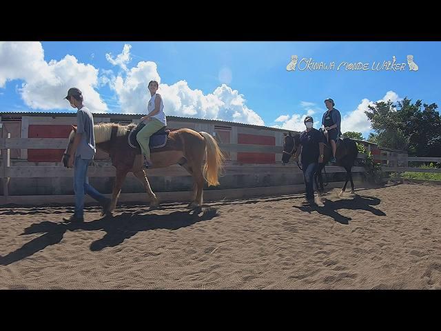 浜比嘉島のヤギ牧場と引退馬の養老牧場