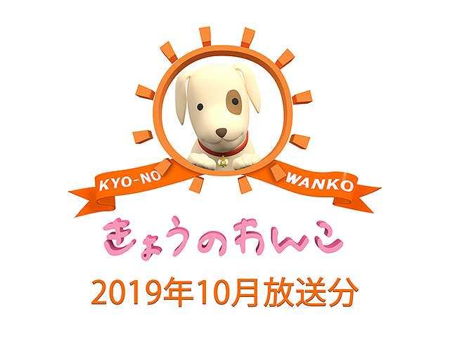 2019年10月放送分 きょうのわんこ