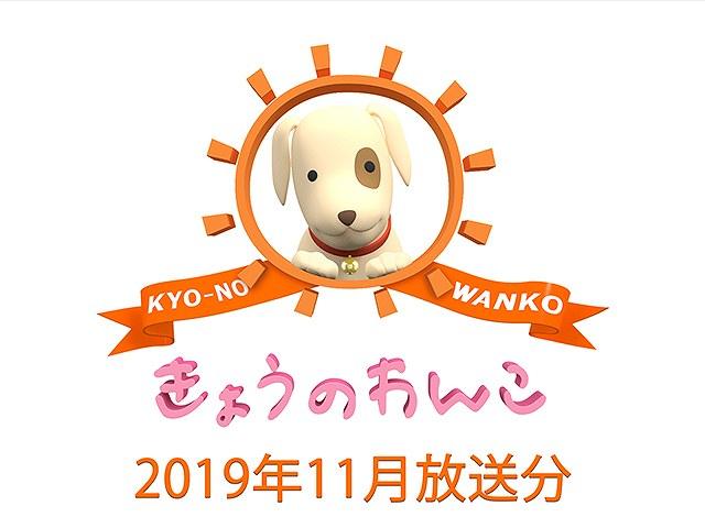 2019年11月放送分 きょうのわんこ