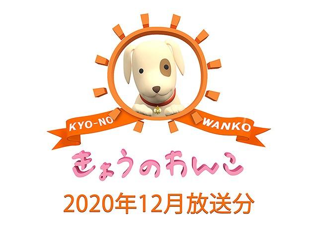 2020年12月放送分 きょうのわんこ