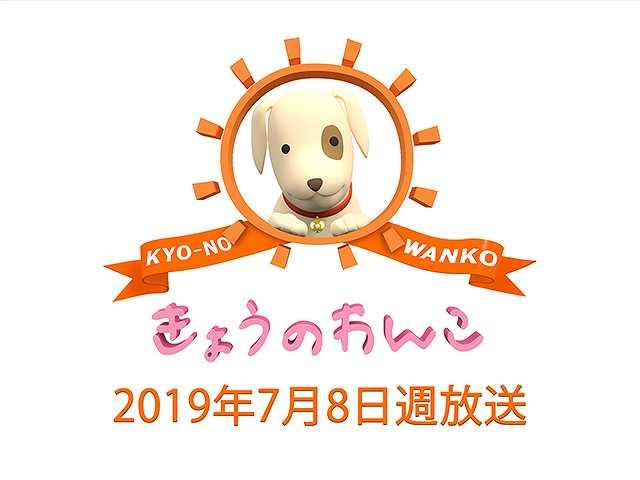 【無料】2019/7/8週放送 きょうのわんこ