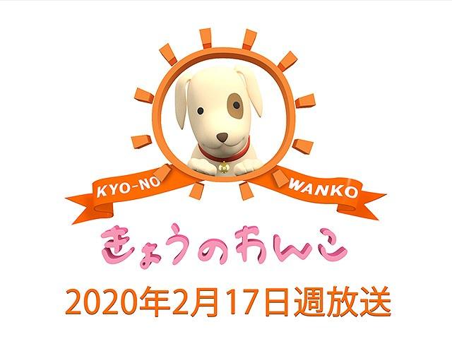 【無料】2020/2/17週放送 きょうのわんこ