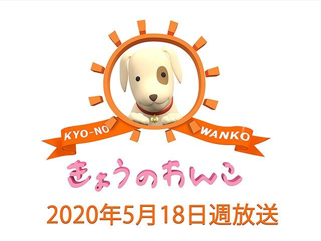 【無料】2020/5/18週放送 きょうのわんこ