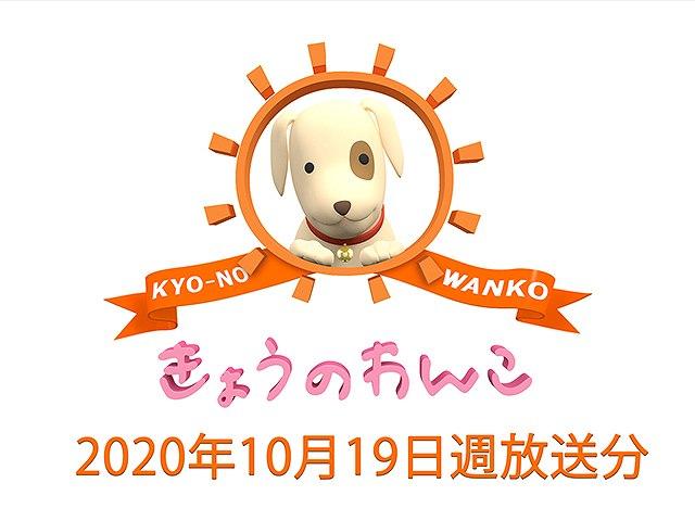 【無料】2020/10/19週放送 きょうのわんこ