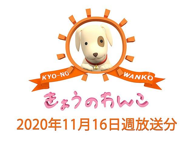 2020/11/16週放送 きょうのわんこ