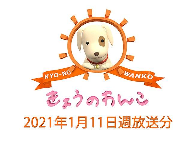 2021/1/11週放送 きょうのわんこ
