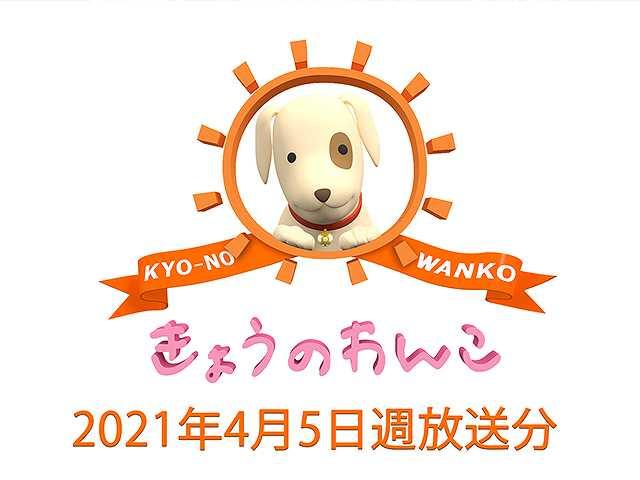 2021/4/5週放送 きょうのわんこ