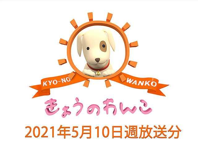 2021/5/10週放送 きょうのわんこ
