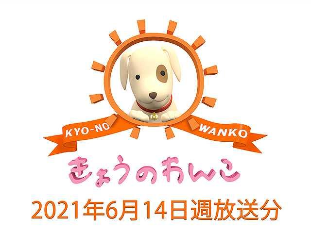 2021/6/14週放送 きょうのわんこ