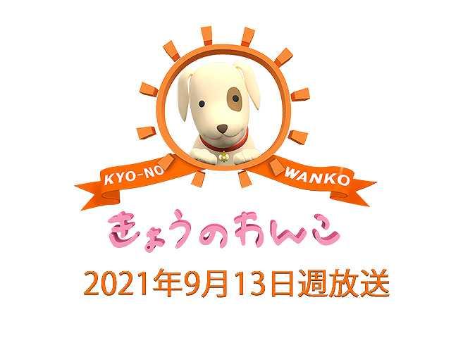 2021/9/13週放送 きょうのわんこ