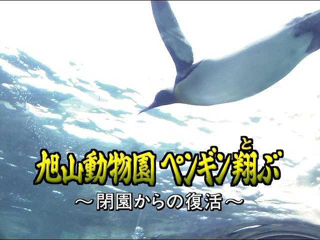 旭山動物園 ペンギン翔(と)ぶ ~閉園からの復活~