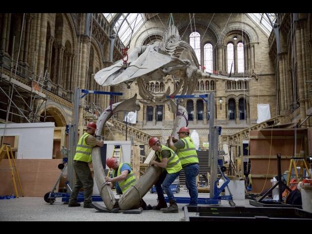 (日本語吹替版)ロンドン自然史博物館 巨大展示物 入…