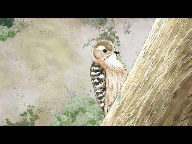 第3話 森へ潜入!フクロウじいさんと唄うのが大好きな…